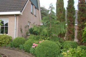 Vacatures Ed Sijmons Landsmeer