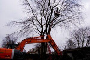 Verwijderen van bomen Ed Sijmons Landsmeer
